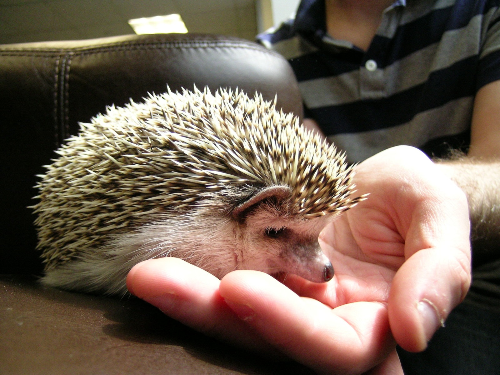 Hedgehog Food – Some Delectable Treats for Your Pet
